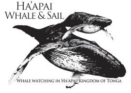 whale and sail